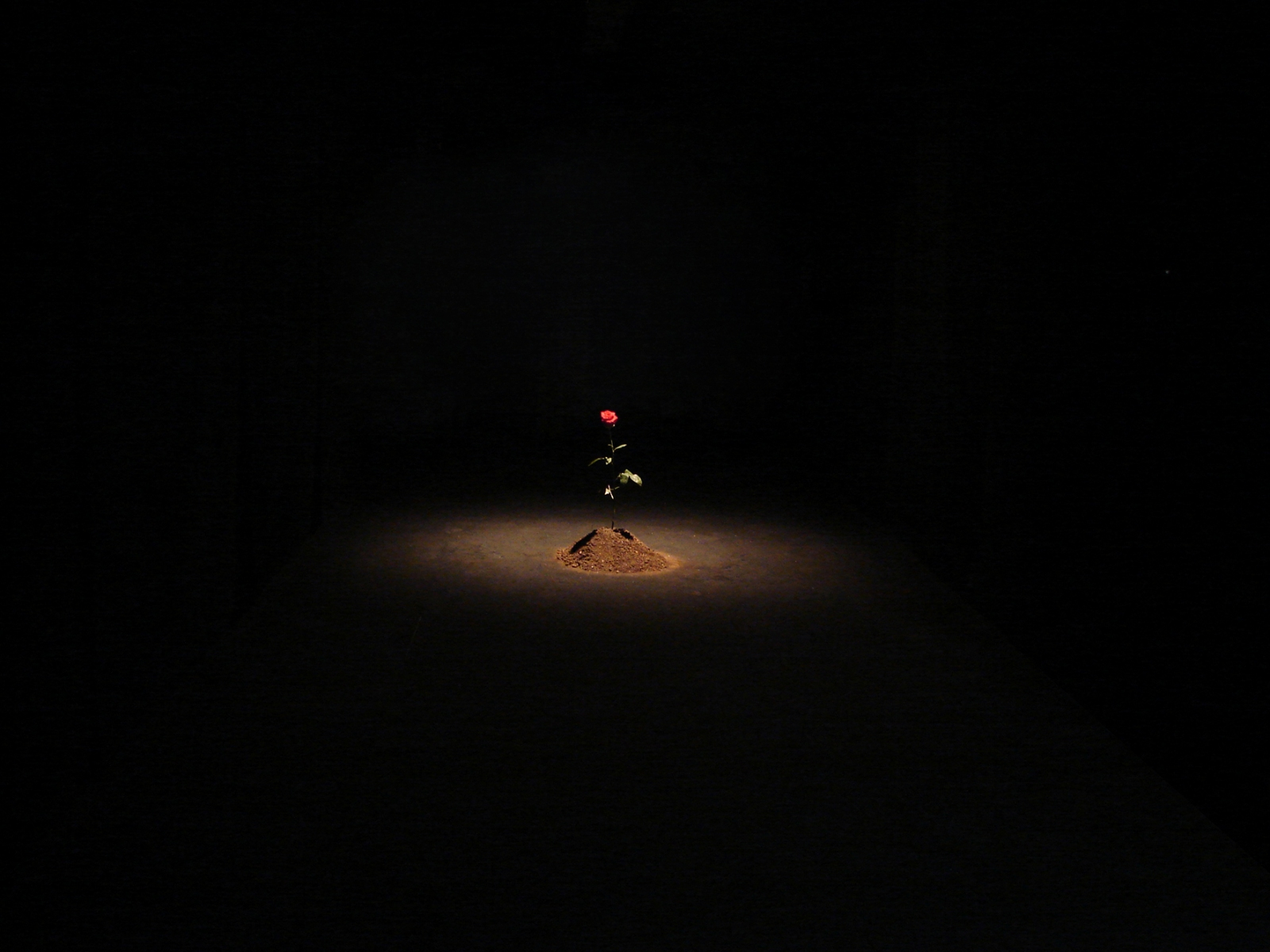 1. Prince, 2012 - Installation, Interactive Art, Environment(Naivy Perez)