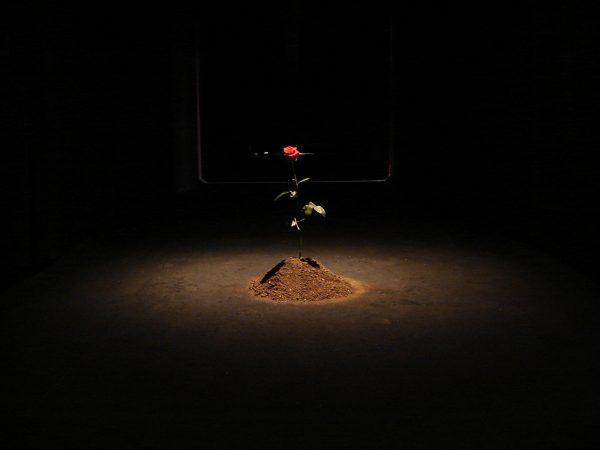 3. Prince, 2012 - Installation, Interactive Art, Environment(Naivy Perez)